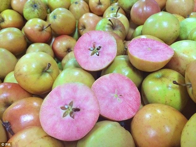 صورة لمجموعة كبيرة من التفاح المفاجأة