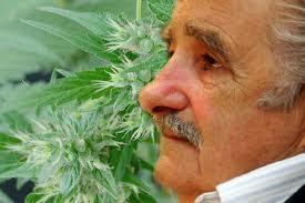 legalização da maconha no Uruguai