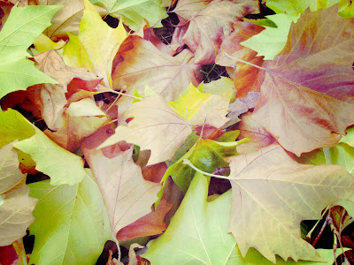 trees, leaf, leaves, foliage, undergrowth, crunch, green, brown, yellow,