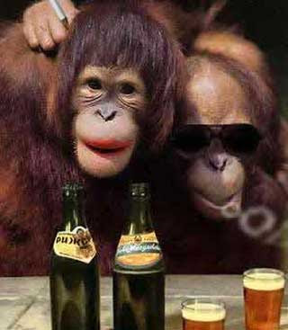 cute funny monkey interesting facts amp latest pictures funny and