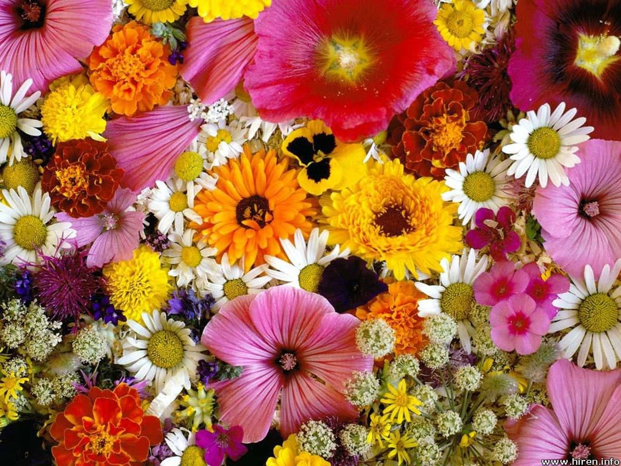 Flowers for flower lovers beautiful flowers wallpapers Beautiful flowers photos