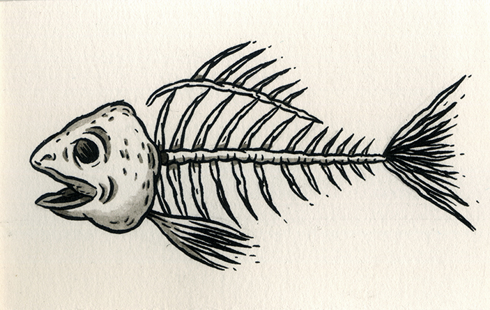 Fish Skeleton Drawing Fish Skeleton