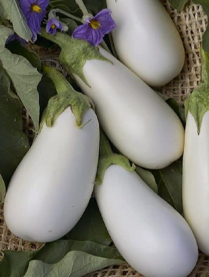 Баклажан овощ долголетия