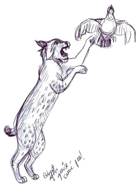 cat grooming lincoln ne