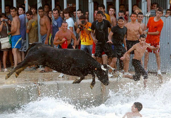 Bous a la Mar - Lembu kejar orang sampai ke laut