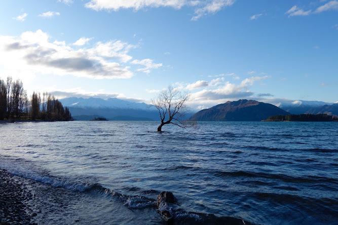 Lone Tree Wanaka Lake New Zealand