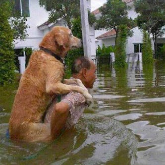 Foto Lucu Anjing Goldenretriever