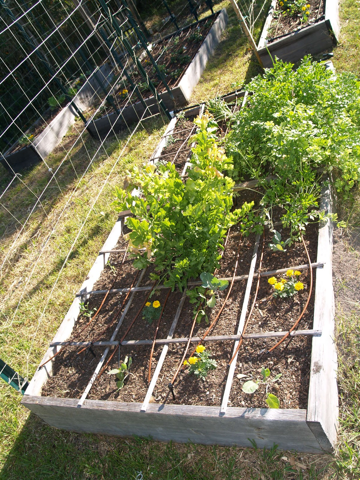 gardening in winter garden march 2013