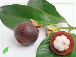 manfaat daun sirsak dan kulit manggis