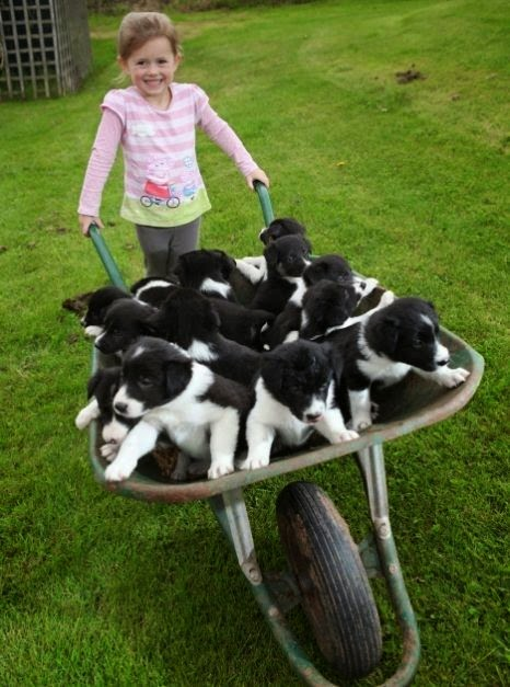 cute girl with puppies