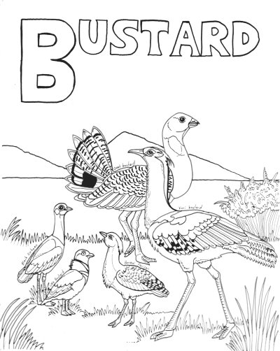 Bustards Are Large Plains Dwelling Birds That Make Their Home In Steppe Type Environments Across Europe Asia Africa And Also Australia