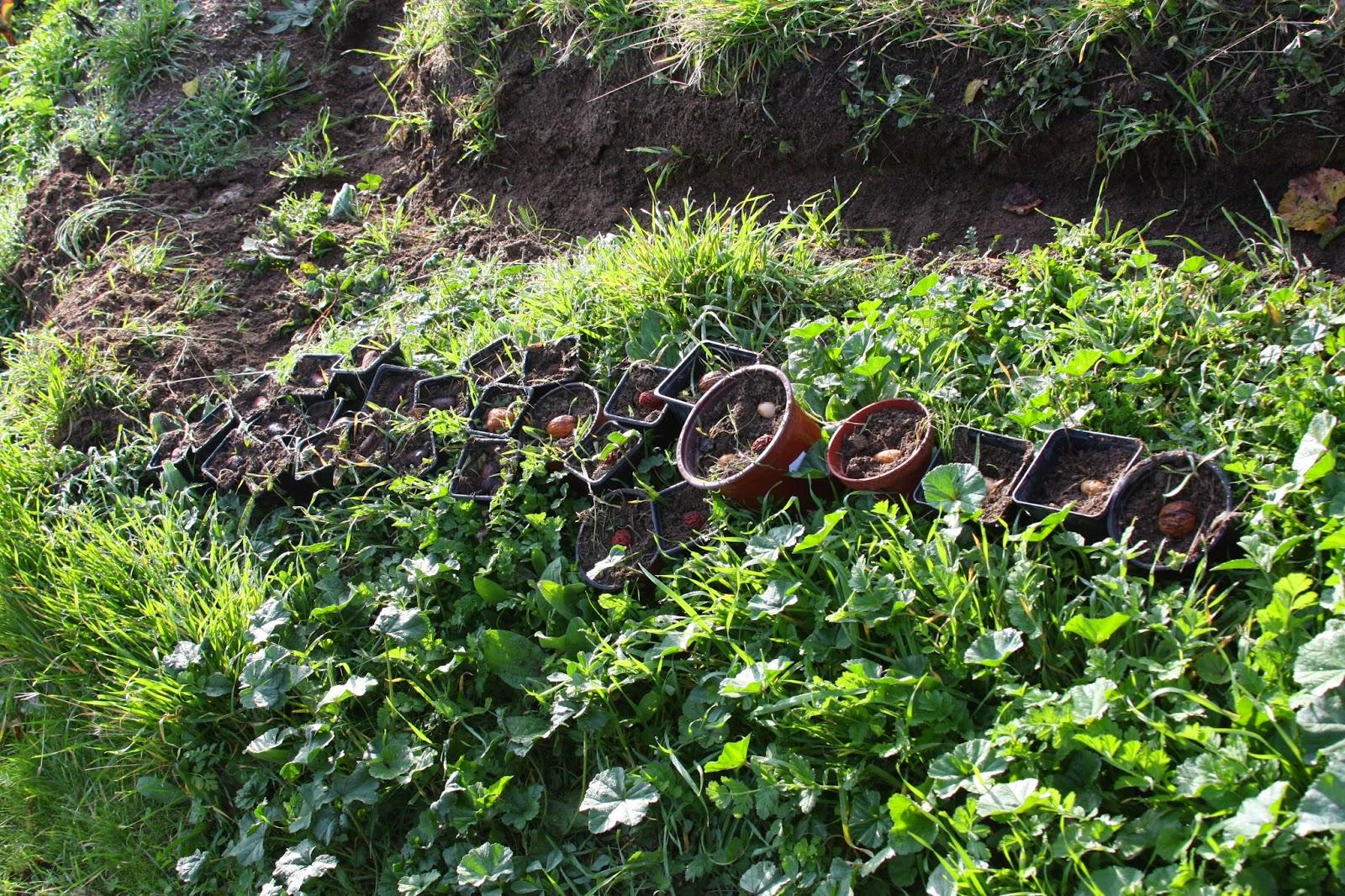 Una suerte de tierra: Plantación de semillas