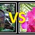 Potensi Bunga Orkid vs Periuk Kera