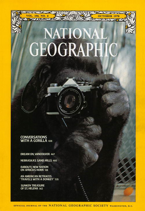 National Geographic Gorilla with Camera Cover