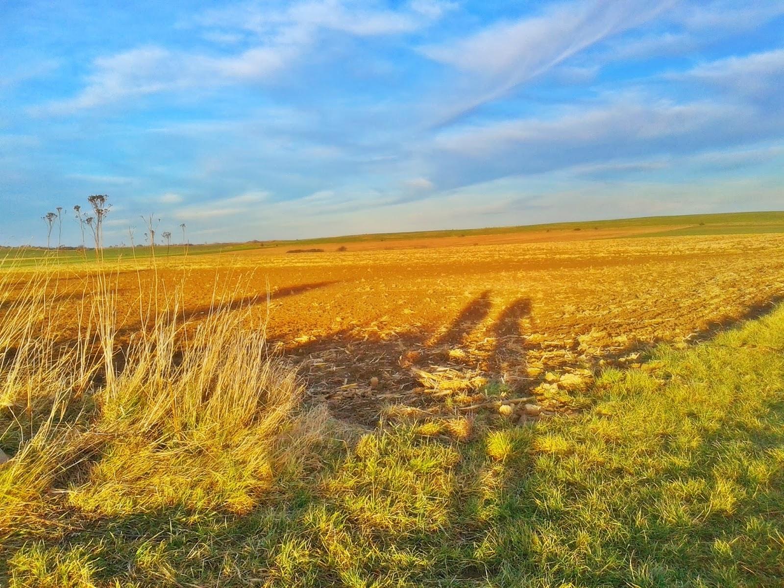 Wiosna zimą na donośląskich polach