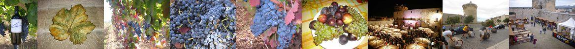 vino aglianico lucano gastronomia