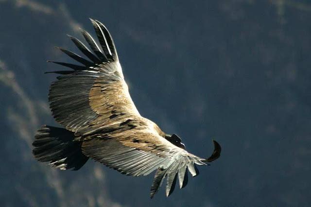"""""""Angry Bird"""" czyli poranny atak lotniczy"""