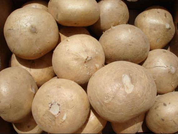 Cách trị mụn bằng củ đậu