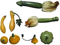 Summer Squash | Cousa squash | Zucchini (courgette) | Pattypan Squash (Scallop squash)
