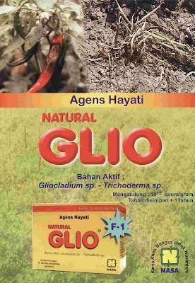 """""""natural glio pengendali hama jamur fusarium spora rebah semai natural nusantara distributor nasa agensia hayati"""""""