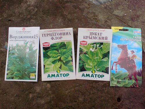 Как выращивать табак вирджиния в домашних условиях - Шина Плюс