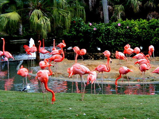 The must see places in las vegas usa background wallpapers for Flamingo gardens nursery