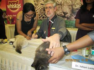 Costliest Persian kittens in the show.Rs 40,00/kitten.