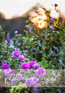 http://blandrosorochbladloss.blogspot.se/2014/10/sommarens-projekt.html