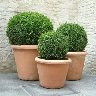 Arte y jardiner a arte topiario jardiner a ornamental for Arbustos de interior