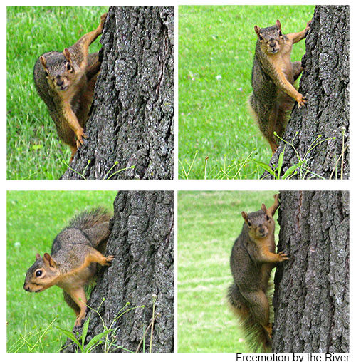 being watched by a squirrel