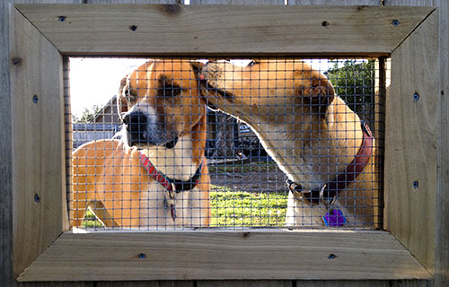 DIY Fence Window for Dogs