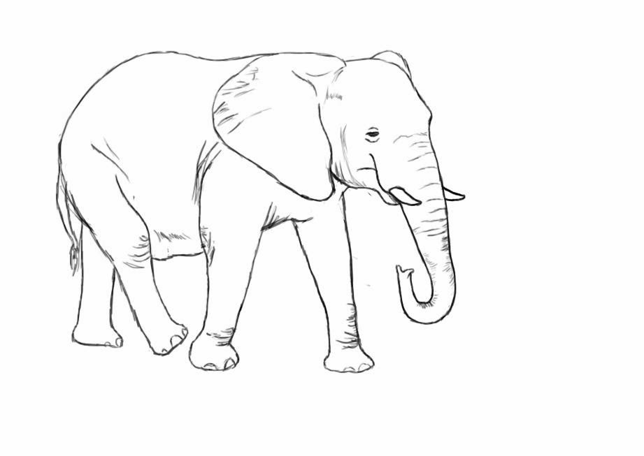 how to draw an elephant cartoon