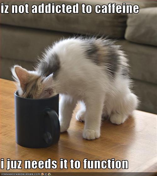 LOL-Cats_Addicted-to-Caffeine.jpg