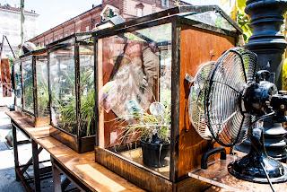 Immagine: Energia dalle piante