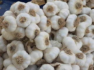 garlic_suppliers