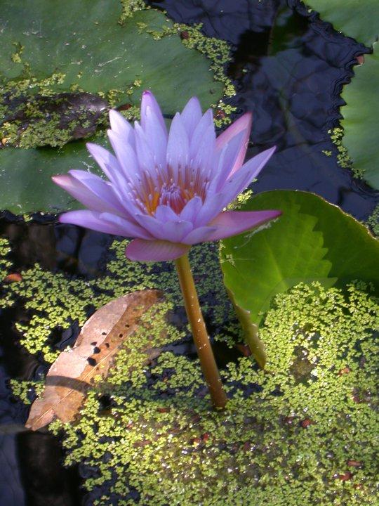 Hermosas fotos del jard n bot nico la laguna parte ii el salvador - Plantas de jardin fotos ...