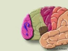 هل سمعتم عن مركز الكذب في المخ..سبحان الله !!!
