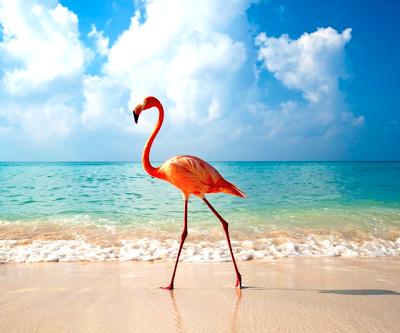 Flamingo en las playas de República Dominicana