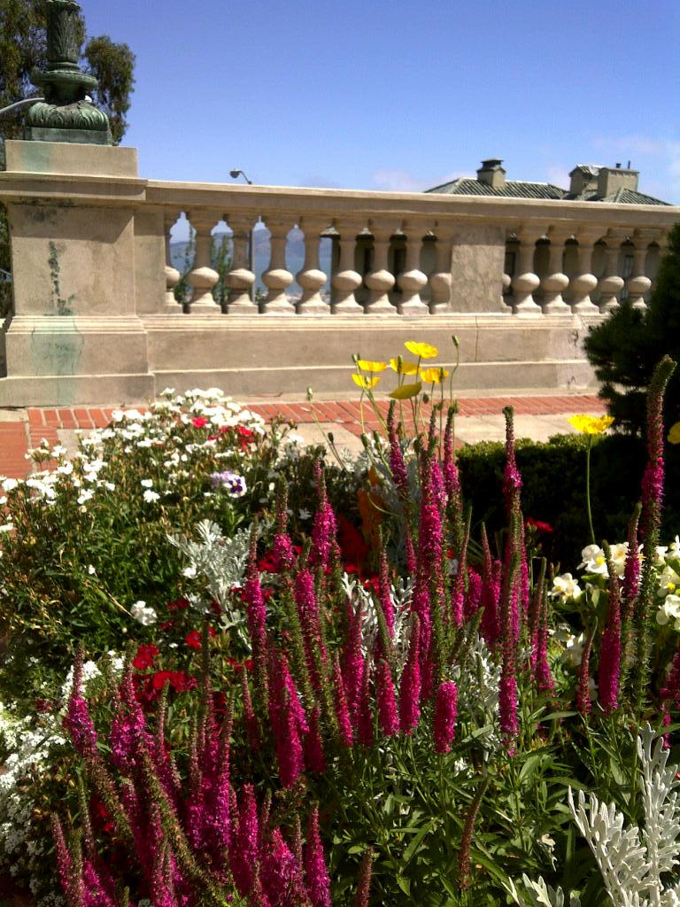 San Francisco Notebook: In The Garden of Hearts vs. Guns
