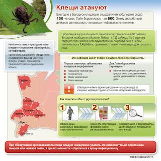 Инфографика о клещах из Беларуси. Клещи атакуют.