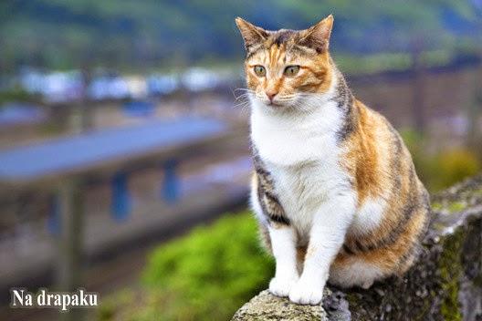 Bo trzeba być wrażliwym, by pokochać koty...