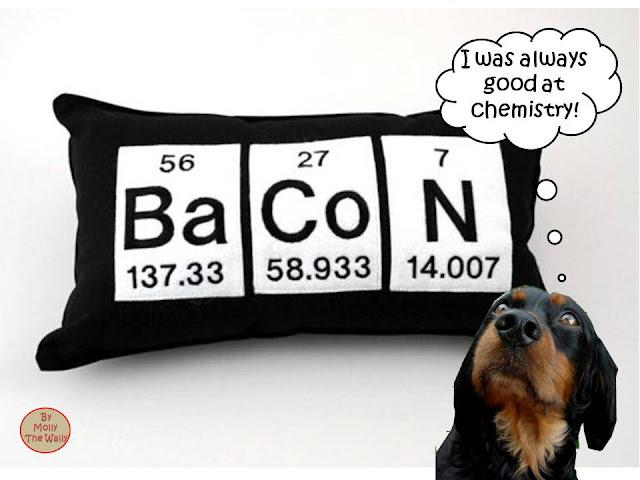 Molly The Wally Says Awaken To Bacon!