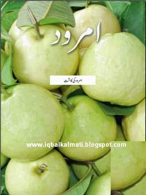 Amrood Ki Kasht (Guava Cultivation)