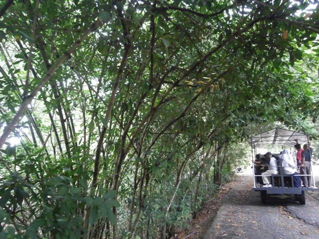 macam macam pokok herba dan rempah samaada daripada malaysia dan luar