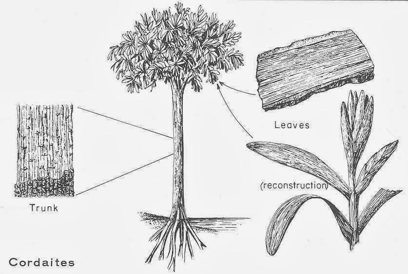 Paleobotany: CARBONIFEROUS PERIOD ~ 358.9–298.9 million ...