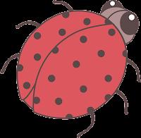joaninha - ladybug