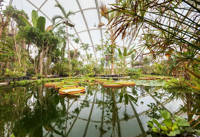 09-Greenhouse-in-the-Botanic-Garden-by-C.F.-Møller-Architects