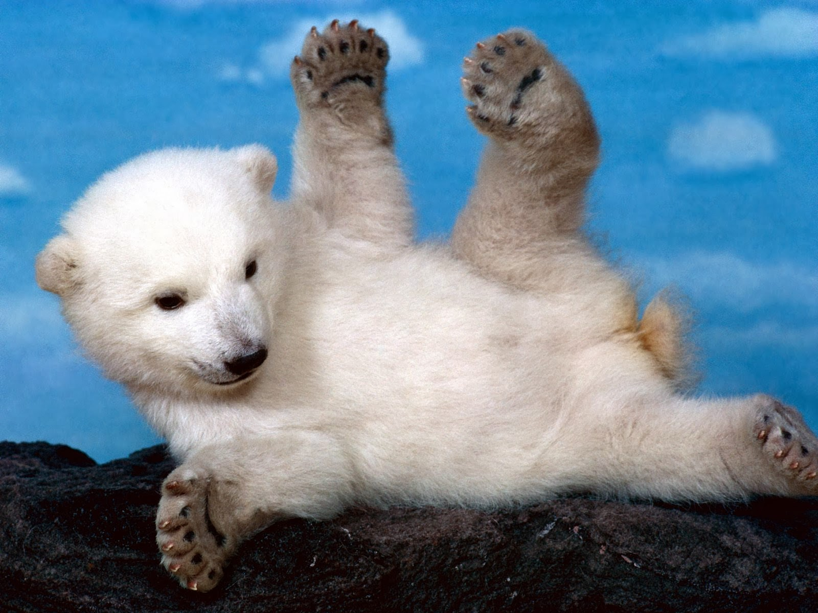 Cute Baby Polar Bear Wallpapers - Wallpaper - High Quality ...