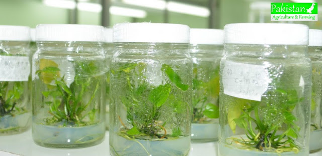Biotechnology in Horticulture, Scope, Future and Pakistan