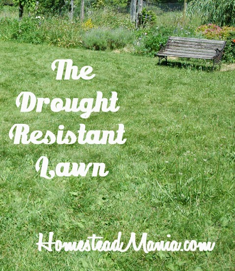 The Drought Resistant Lawn, shared byHomestead Mania